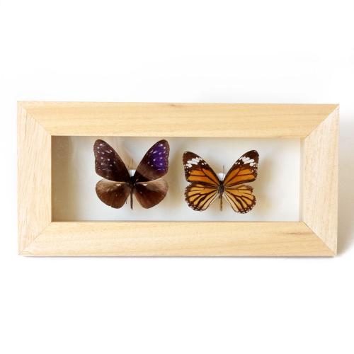 Lady-biche-papillon-double-A-1