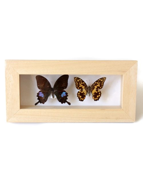 Lady-biche-papillon-double-B-1