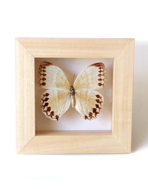 Lady-biche-papillon-simple-1
