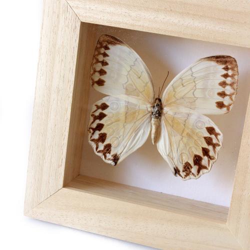 Lady-biche-papillon-simple-2