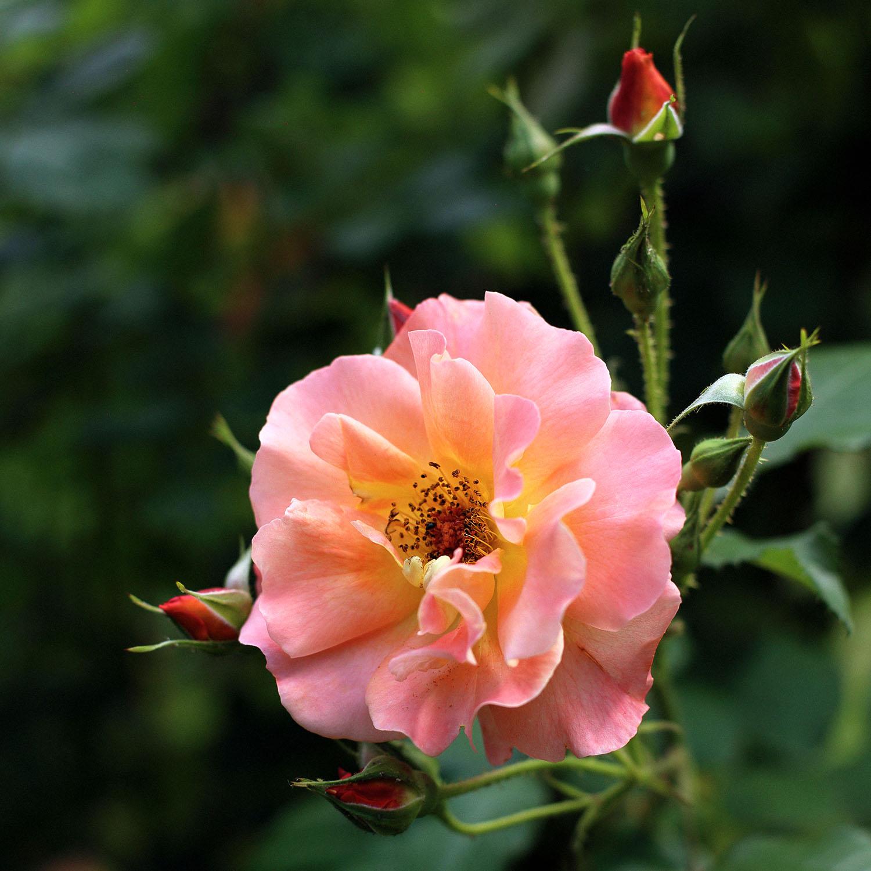 Lady-Biche-Blog-Botanique-Metz-15